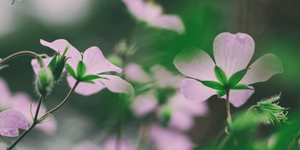 Keep the Scent: Using Paid Traffic for Your Landing Pages