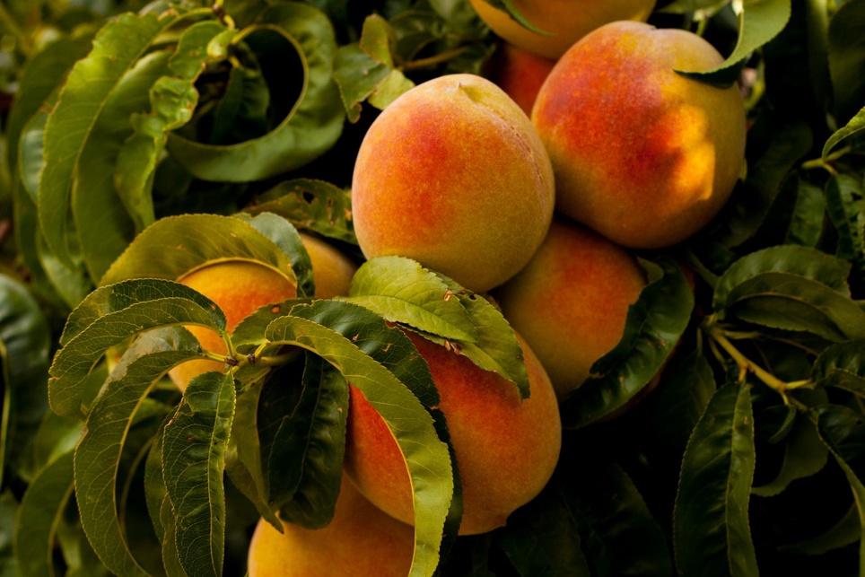 Jak wykorzystać Peach w działaniach marketingowych?