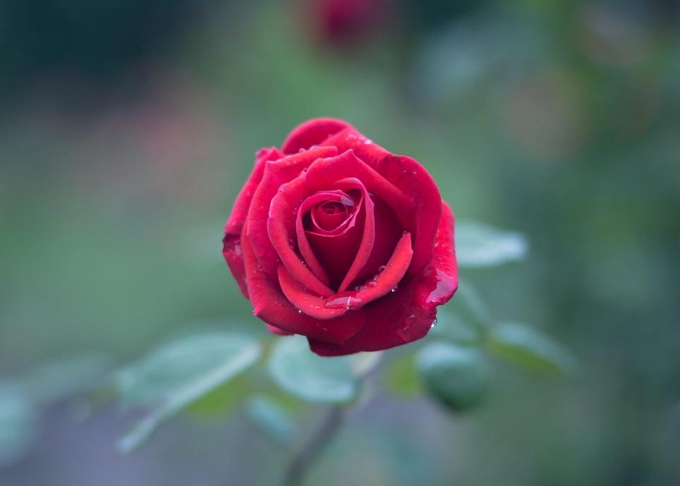 Jak kwiaciarnie internetowe zwiększają liczbę otwarć i kliknięć przy okazji walentynek?