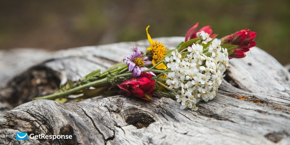 Открываемость и кликабельность – как флористы улучшают эффективность рассылки перед Днем Влюбленных